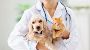 Here's What Pet Owners Should Know About Corona Virus